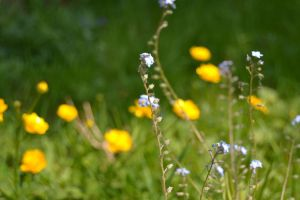 Forget me not II by Mazarde
