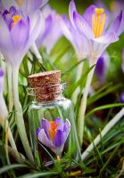 Set spring free by Silvia-D
