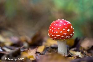 Fly agaric by Slinky-2012