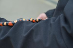 Milksnake 2 by Very-Free-Stock