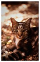 Most photographed cat on earth by GoDsGiMp