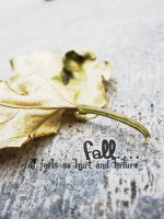 Fall by mideru13alpha22
