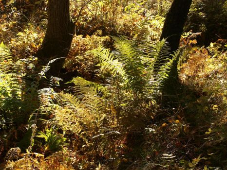 fern in forest 2 by Finsternis-stock