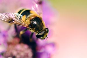 Bee on a flower by Madrisa