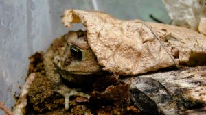 Half-O-Toad by TortueBulle