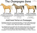 Equine Colors- Champagne by Kholran
