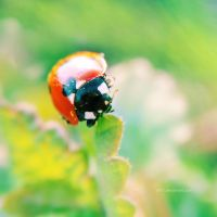 .: spring ladybug :. by all17