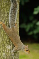 Squirrel 3 - Regents Park by wildplaces