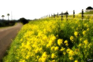 Flowered Road by iFix