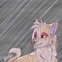 The rain... by cookiiejar