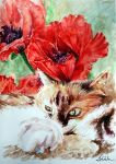 The Cat and poppies by danuta50