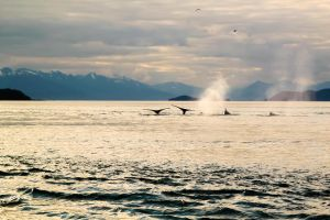 Whales by Suzannesphotos