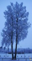 Winter tree by wellgraphic