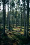 Forest Stock 42 by Sed-rah-Stock
