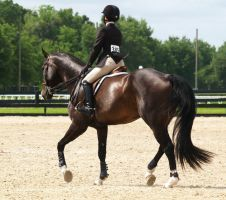 Collected Trot by zippostock