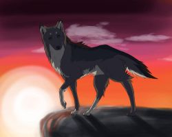 Wolf Sunset by ZacharyWolf