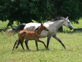 Mare and Foal 4 .:Stock:. by Photopolis