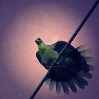 Bird on a Wire by wanderlust-or-bust