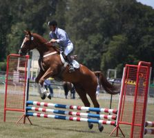 STOCK Showjumping 400 by aussiegal7