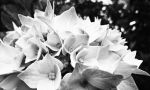 in Black and White by divafica