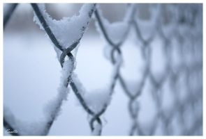 Frozen Fence by Enalla