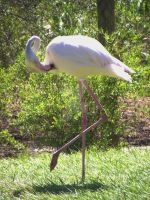 Flamingo Stance by njbartworks