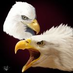 Eagles. by CarlosMatallanaDiaz