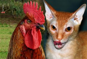 Demon Cat Cock by cloistering
