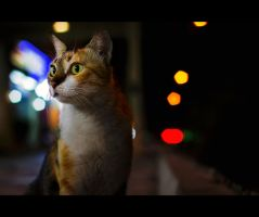 Urban Cats - 73 by MARX77