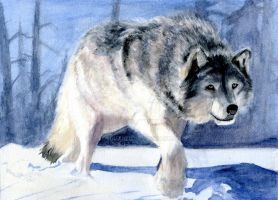 Wolf Watercolor by EdSquared