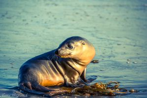 Lost at Sea Lion by Vespertine420