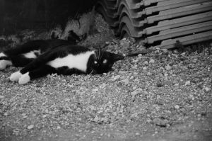 Sideways cat by MikeyHramiak