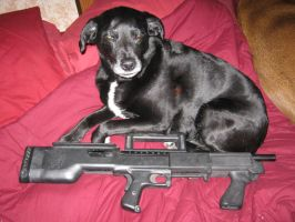 Shotgun Puppy n Bullpup Shotty by vonmeer