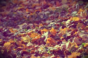 autumn cover by Iulian-dA-gallery