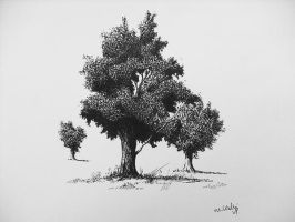 Trees, ink by mwolski