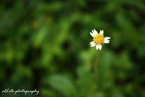 lalang by alLets-Lexy