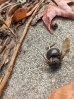 death of a bee by voider00