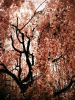 pink blossom assembly by MELONed