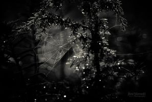 White Web by JoniNiemela