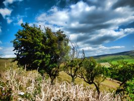 Just a few Trees by Siphotografx