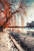 Winter Red by INVIV0