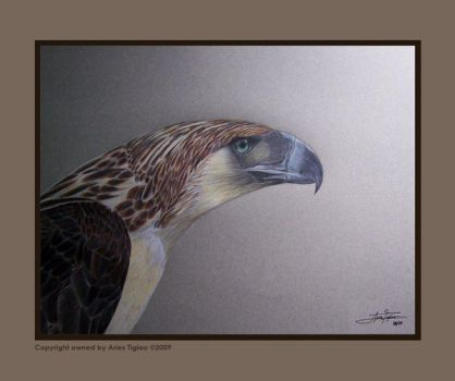 Philippine Eagle II by AriesCT