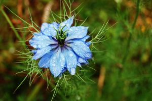 Blue Flower 1 by andyjh07