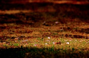 grass HDR by Mackingster
