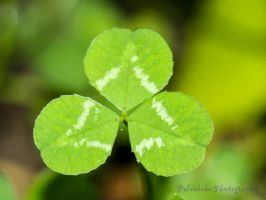 Simple Clover by Kaptive8