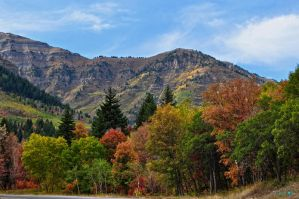 Fall Colours by Moohoodles