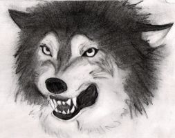 snarling wolf by zen1990