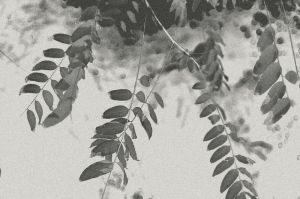 Leaves from yester years by Image-heart
