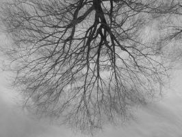 grey tree by evil-m0nkey