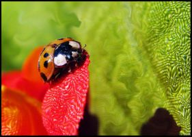 Ladybug 2 by 1000--Words
